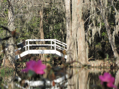 Magnolia Plantation in South Carolina