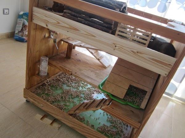 Cobayas a lo loco casa de madera para cobayas - Casas de madera balcan house ...