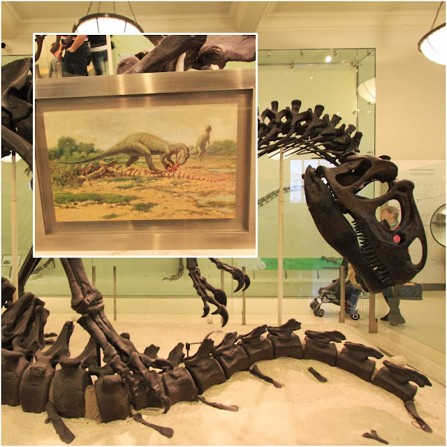 Allosaurus is shown feeding on a carcass with bones marked by grooves at American Museum Natural History in New York City, USA