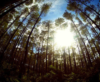 Taman Hutan Jaya Lembang | Tempat Wisata Bandung
