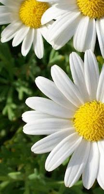gentillesse, empathie, sympathie, amour, intérêt, patience, subtilité, délicatesse