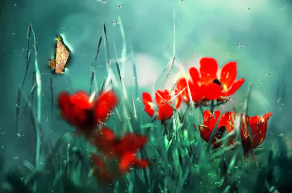 Cute Photography by Gilad Benari