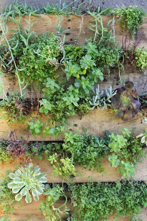jardin vertical economico