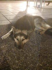 Βρέθηκε αρσενικό σκυλάκι στο ΙΚΕΑ Θεσσαλονίκης. Το ψαχνει κανεις;