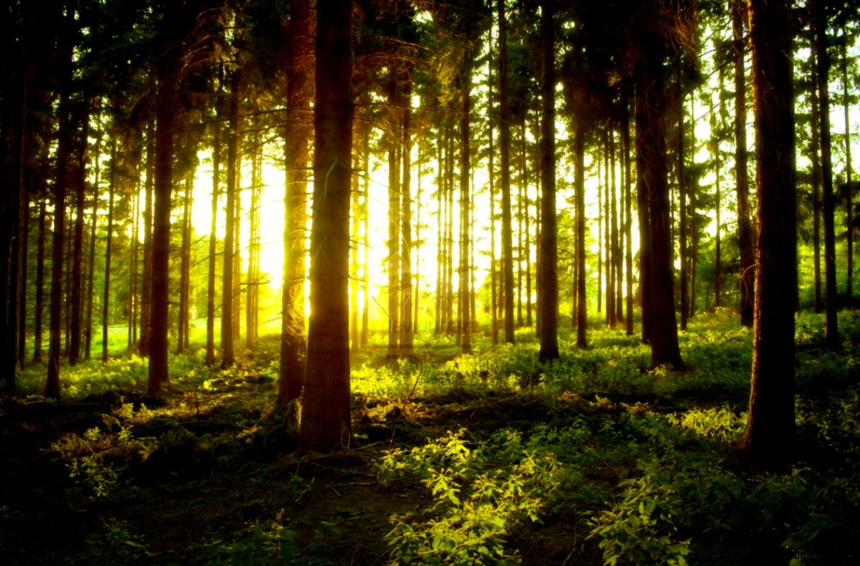Forests Sunsets and Google on Pinterest