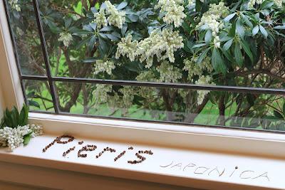 Pieris japonica - binomen art