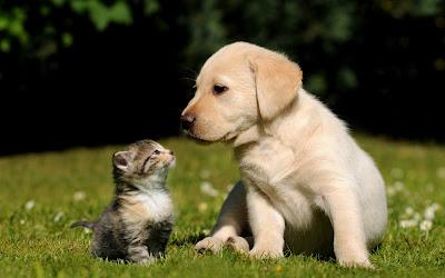 Mascotas muy lindas, perrito y gatito.