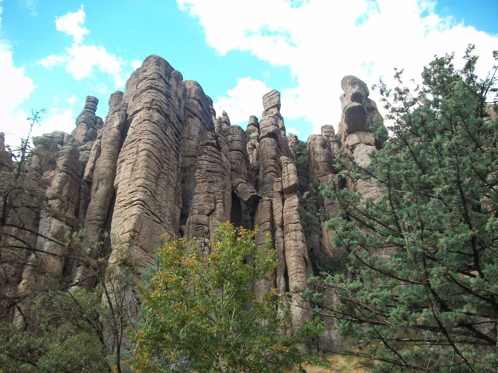 Organ Pipe Formation