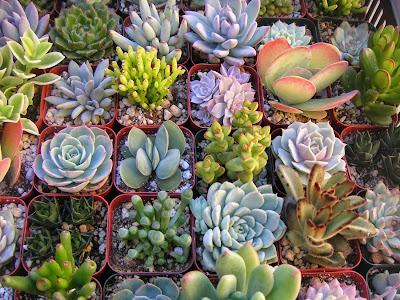 http://3.bp.blogspot.com/-SBOKiYPzVcU/UmA9pWYcOpI/AAAAAAAAAOY/KQqa8otEt7E/s1600/succulent_plant_1.jpg