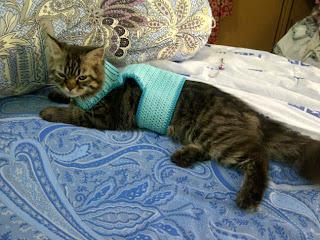 baju rajut kucing, crochet kitten cardigan