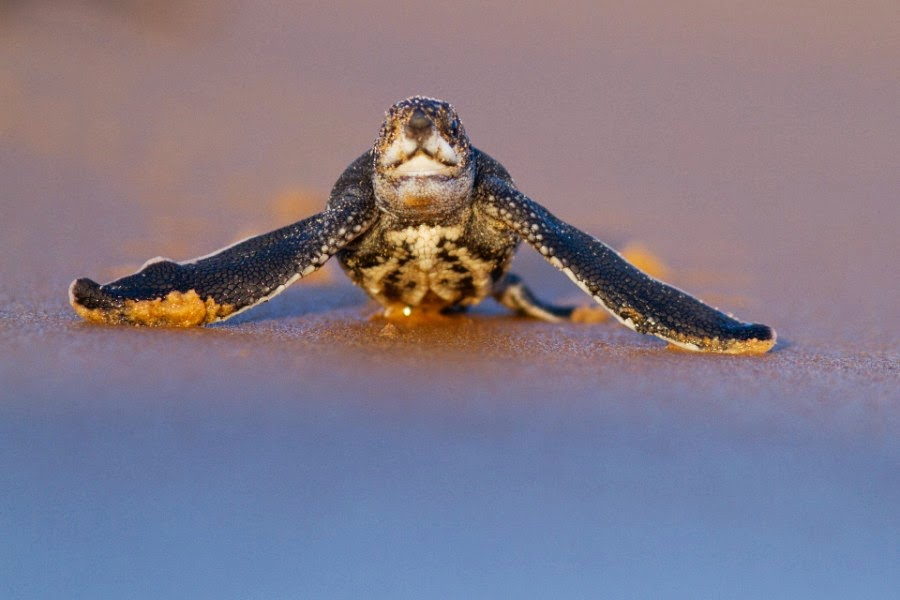 28 astounding pictures of sea turtles part2 best