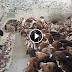 Ταΐζοντας τόσους σκύλους...