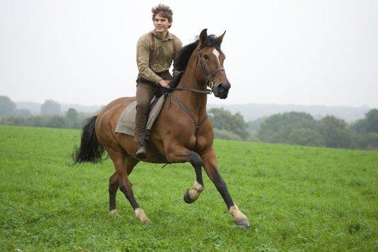 war_horse_caballo_spielberg