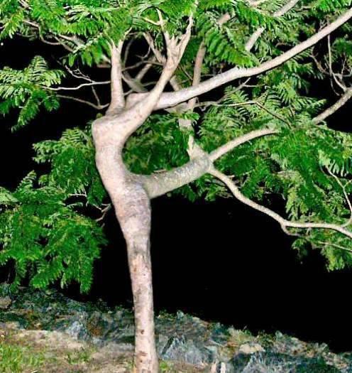 Bentuk-bentuk Pohon Unik ditemukan di Berbagai Tempat di Dunia