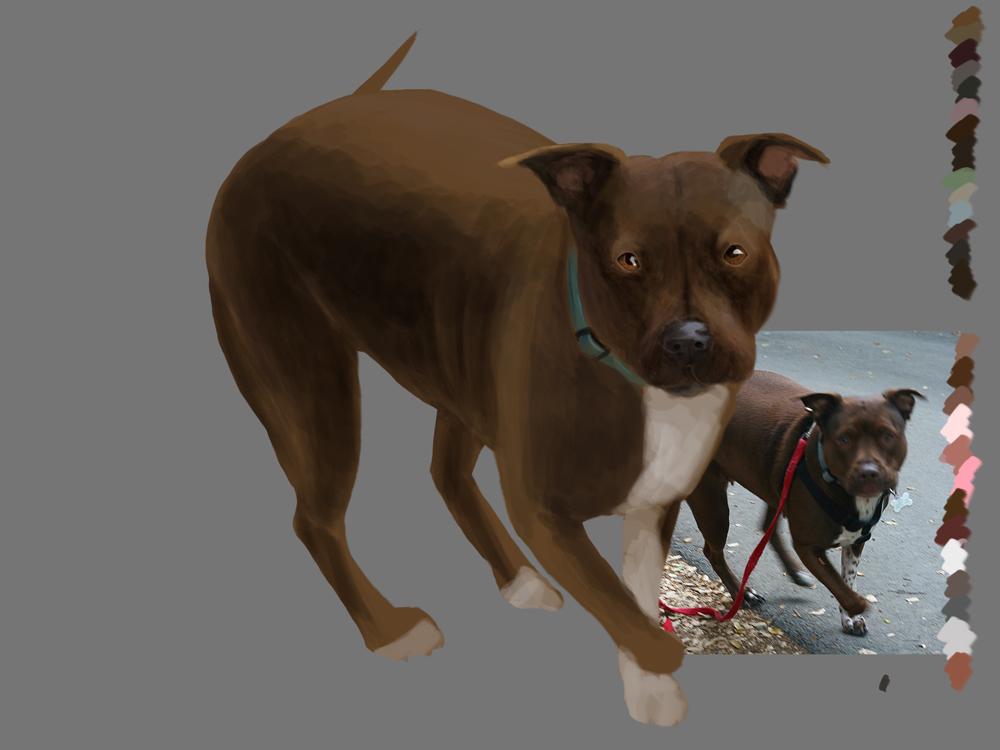 Anatamation Where Anatomy Meets Animation Dog Anatomy 3