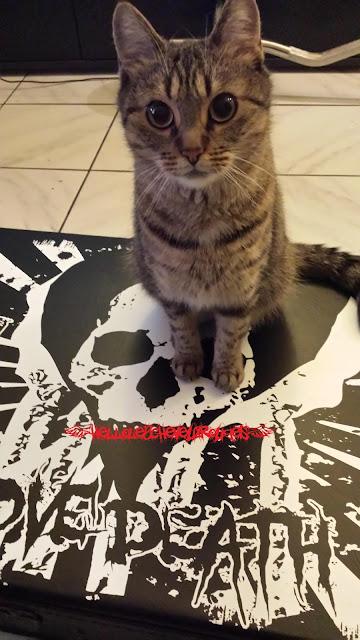 chat tigré assis sur un boitier de guitare avec un dessin crane et coeur www.hellolescheveuxrouges.com