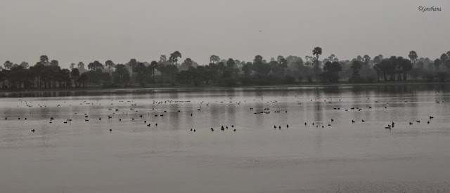 Pulicat Lagoon