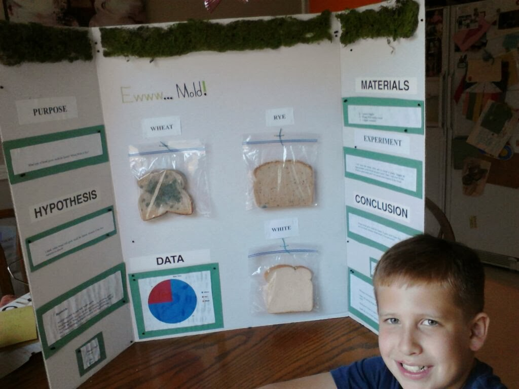 """bread mold science project For this science project, you set out to answer the question, """"which food will mold grow on faster: bread, milk, bananas or cheese"""" while completing the project, you will discover how quickly certain foods spoil and grow mold when you do not properly store them, such as placing them in a refrigerator."""