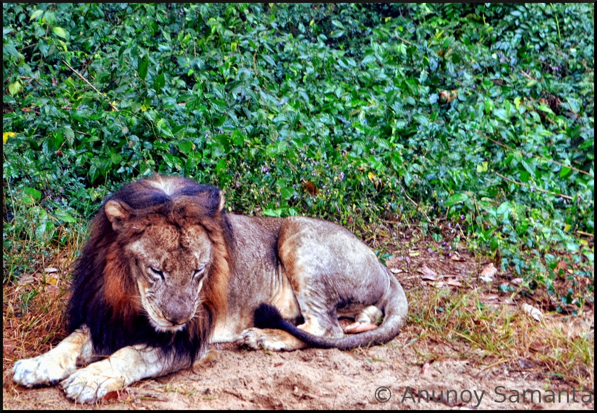 Glimpses of Nandankanan Zoological Park