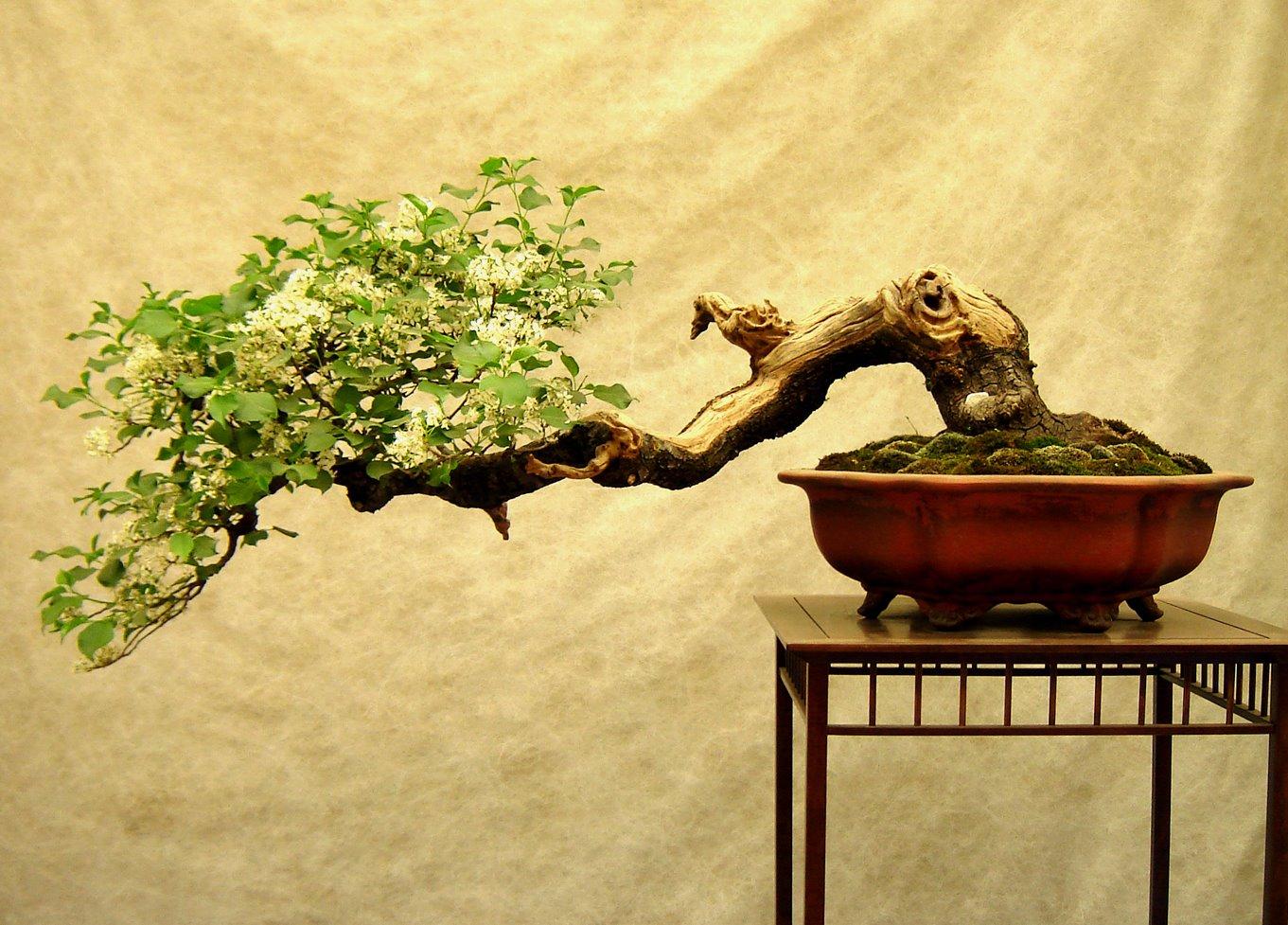 http://3.bp.blogspot.com/-SDA6IW-RlhQ/T4ur5zJfruI/AAAAAAAAC9M/4ly4s56QTr8/s1600/bonsai.jpg