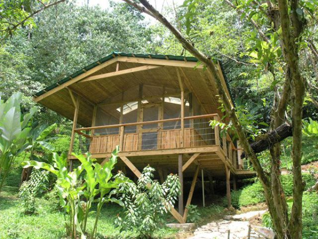 Incredible Tree House in The Jungle Of Costa Rica Seen On www.coolpicturegallery.us