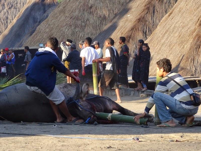 Indonezja, Flores, tradycja, tradycyjne wsie, ofiary, ofiarowanie, tradycyjne tańce