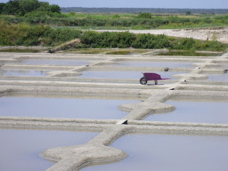 Sunny day harvesting fleur de sel in the salt fields of Guerande, France