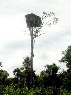 casa en árbol