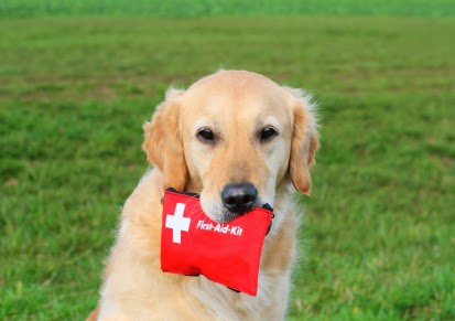 Pet Disaster Preparedness Plan