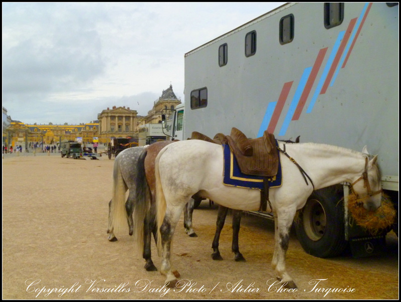 Horses Versailles TV series Canal+