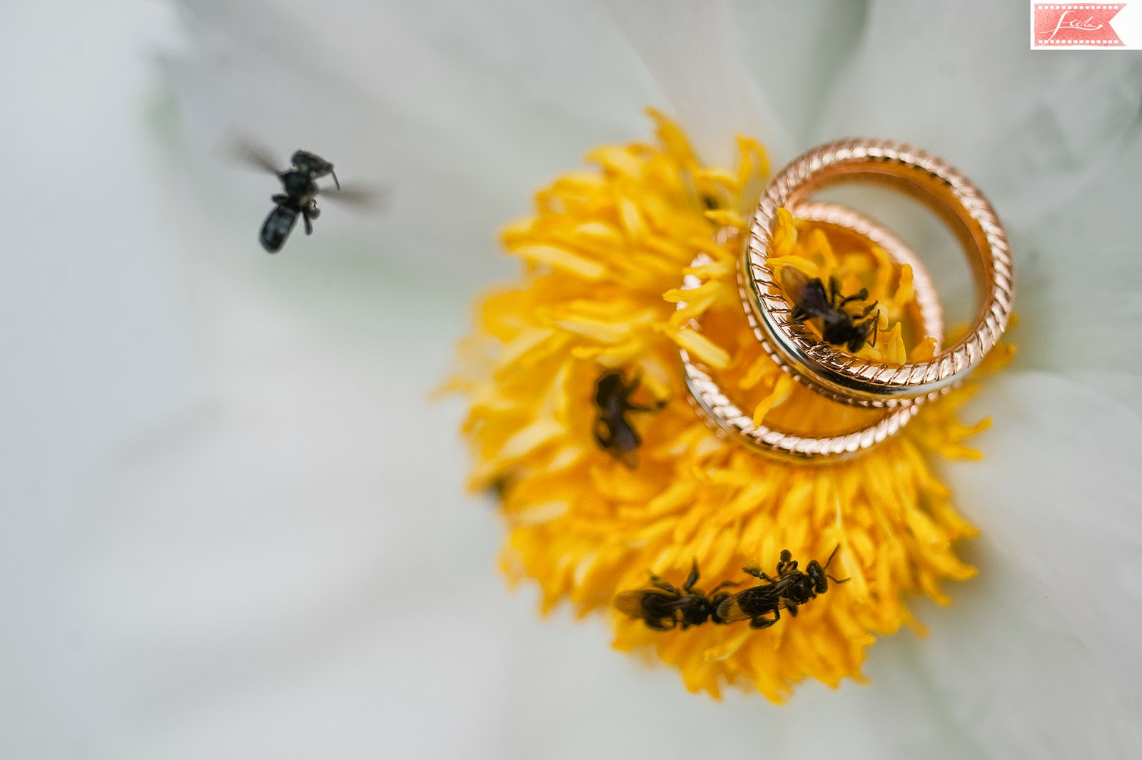wedding rings bees flowers feelm