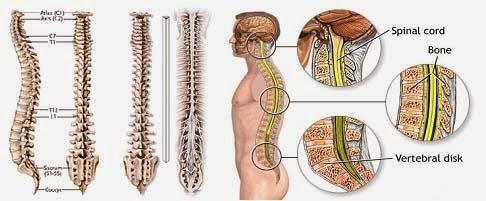 Cách chữa trị và phòng ngừa bệnh đau lưng