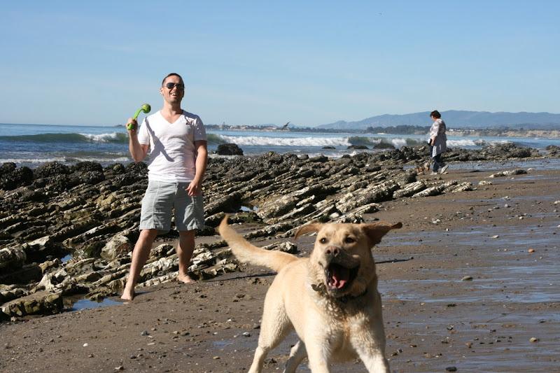 Labrador fun Hendrys Beach