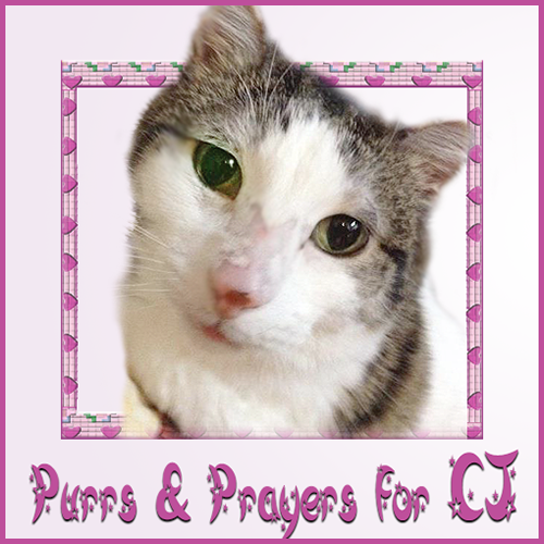 Purrz and Prayerz Fur CJ
