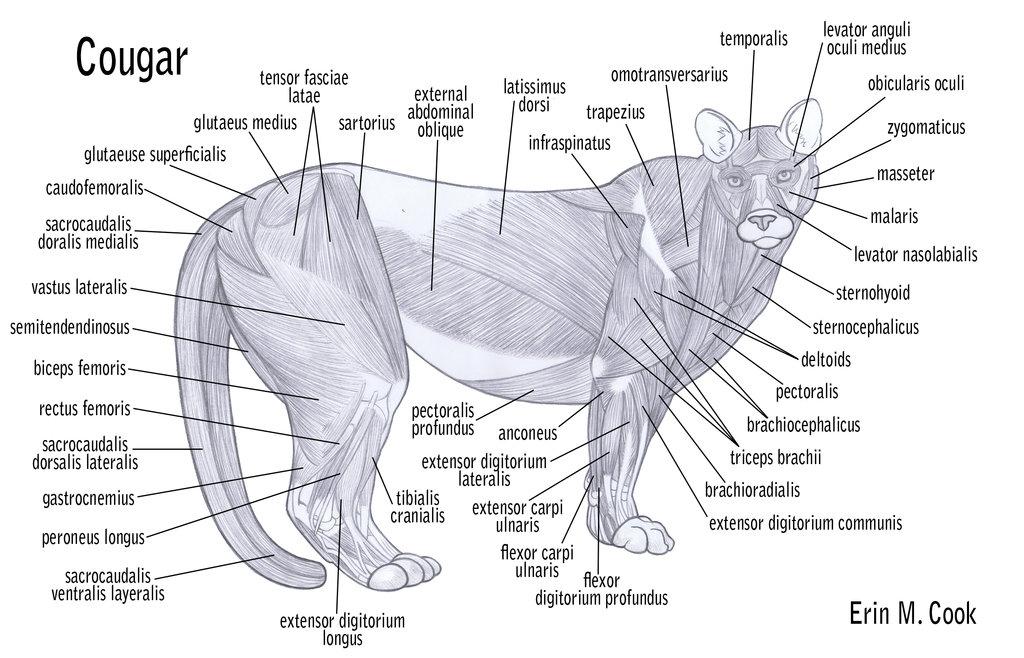 Schön Lion Anatomy And Physiology Zeitgenössisch - Menschliche ...