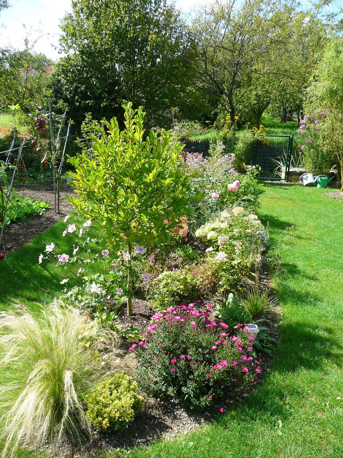 Notre jardin secret.: Asters et compagnie..