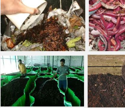 Vermicompost soil conditioning