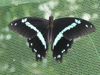 Zanzibar Butterfly Center