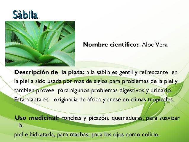 Descubriendo las plantas medicinales plantas y sus for Tipos de hierbas medicinales