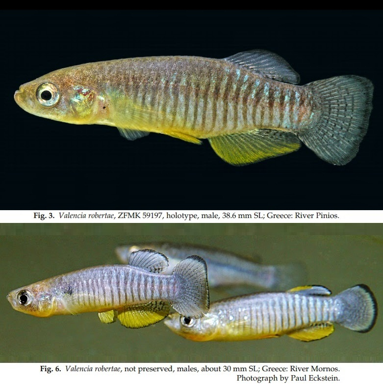 Species New To Science Ichthyology 2014 Valencia