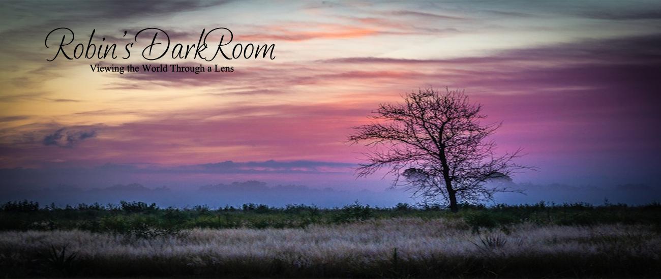 Robin's Darkroom
