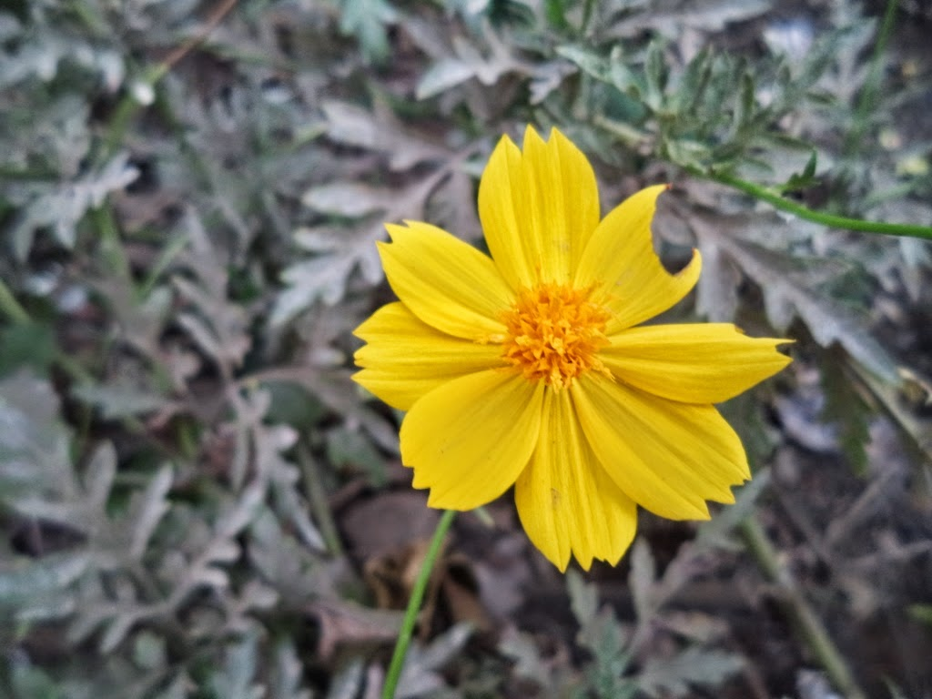 Beautiful bright yellow colored flower