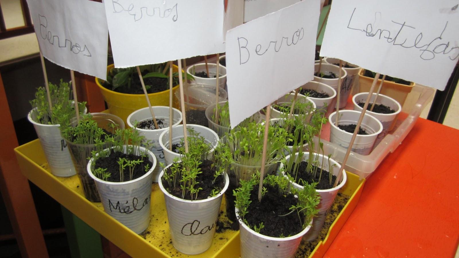 Maestranainfantil Proyecto Est N Vivas Las Plantas