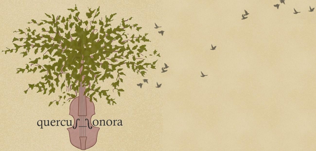 Quercus Sonora