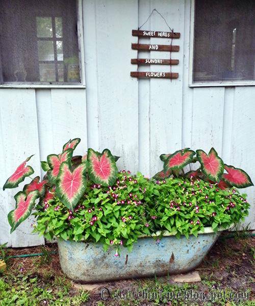 Garden in a tub.