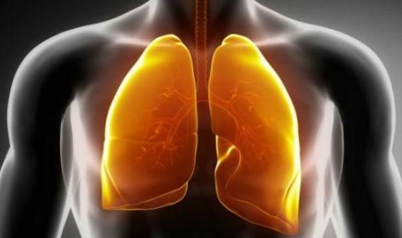 Cara Membersihkan Paru Paru dari Asap Rokok