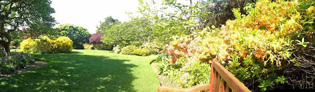 dunedin botanical garden flowers