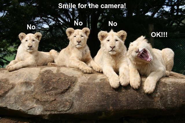 30 Funny animal captions - part 12 (30 pics), animal memes, animal pictures with captions, funny memes, funny animals