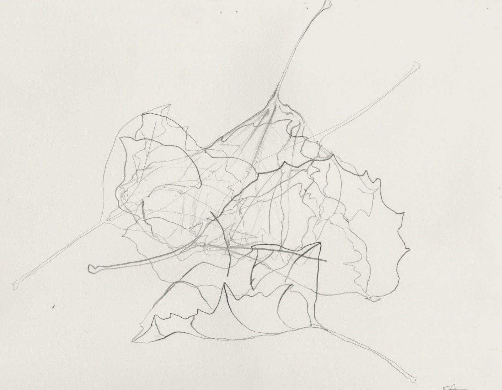 Contour Line Drawing Leaf : Introduction to the studio isabella gonzalez leaf