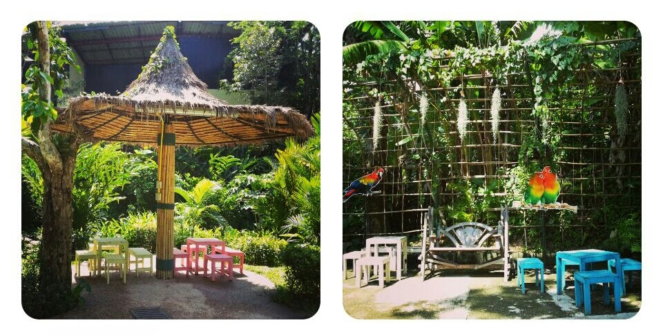 Phuket Bird Park, Easy Day Thailand
